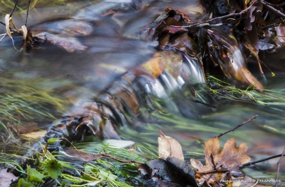 L'acqua elemento di vita