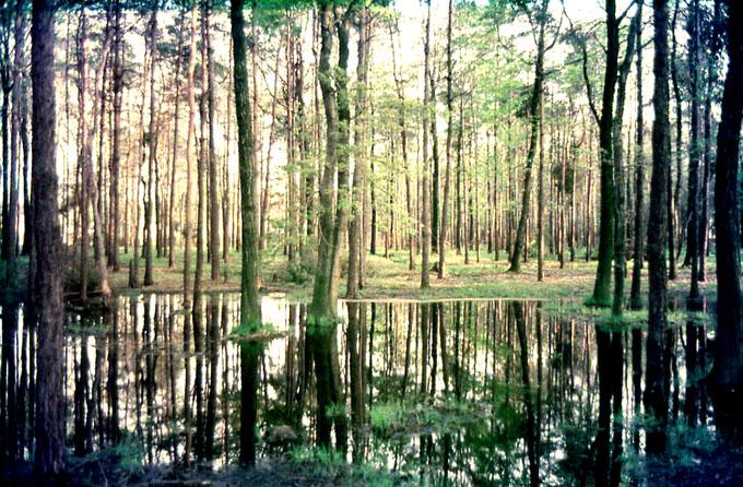 Boschi e laghi