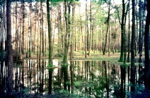 bosco acqua