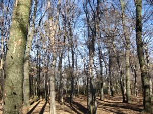bosco-carpino