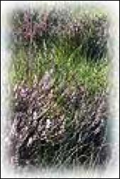 la-flora2