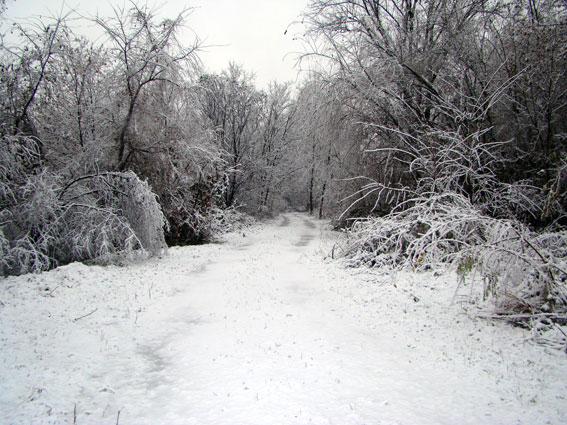 il parco d'inverno