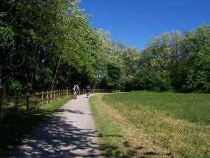 riserva-boschi