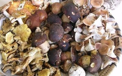Funghi nelle Groane, i consigli di Andrea Pasetti