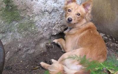Cane smarrito nel Parco Groane