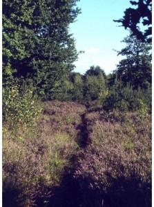 La passeggiata nel bosco