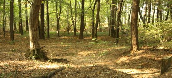 Lo stato di salute dei boschi in Lombardia