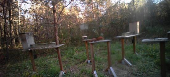 Lo scoiattolo rosso catturato…dalle telecamere