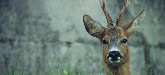La serata naturalistica sui mammiferi