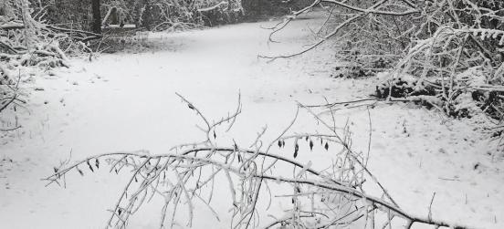 Neve sulle Groane: le foto sui nostri social