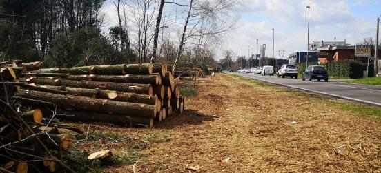 Intervento di miglioramento forestale a Barlassina
