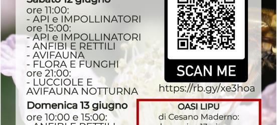 DALL'11 AL 13 GIUGNO TORNA IL BIOBLITZ AL PARCO DELLE GROANE